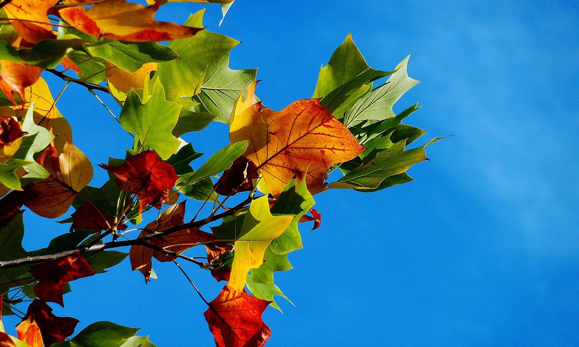 Kolory Jesieni w Hotelu Artus